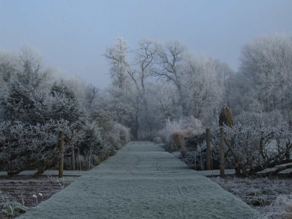 Waterperry Winter Gardens_1